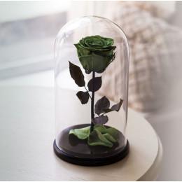Оливковая роза в колбе